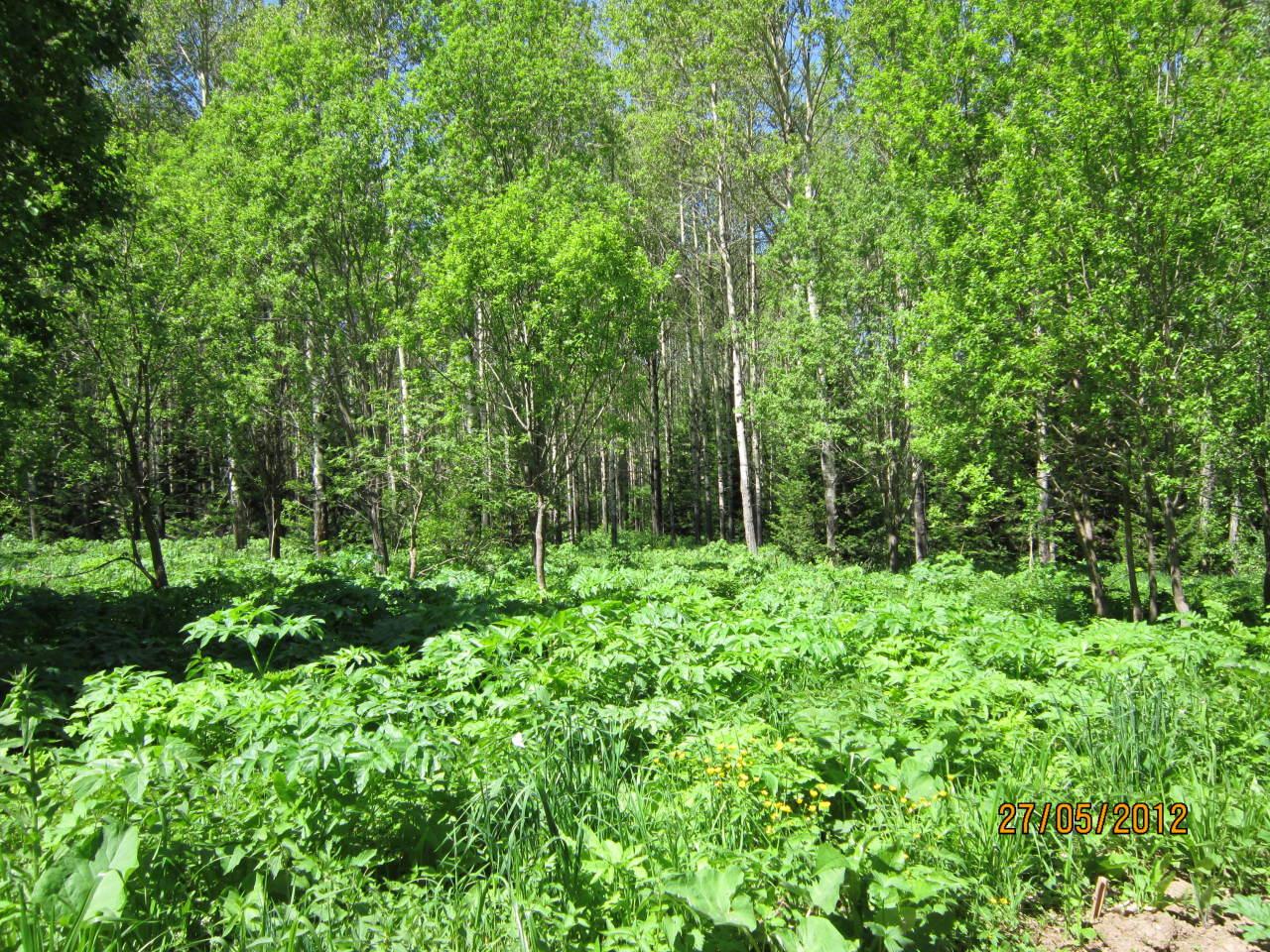 Лес в Малой Убинке.