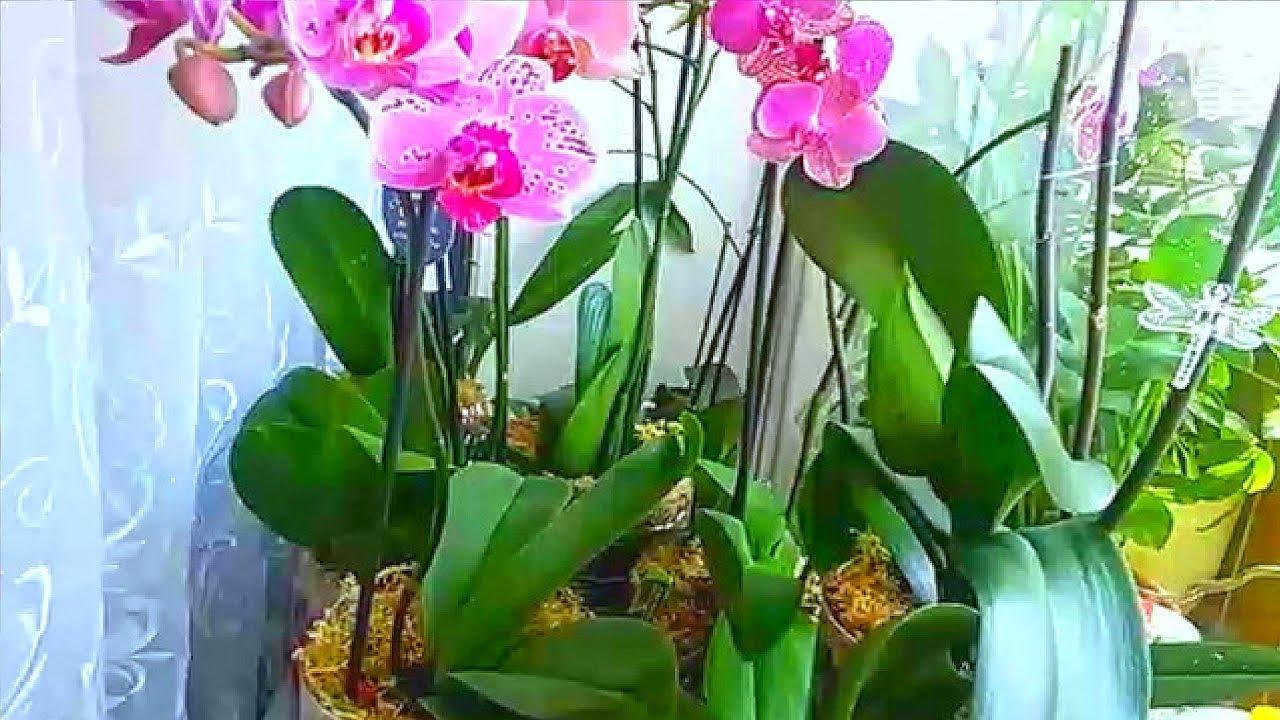 Всего 9 правил и ваши орхидеи будут цвести бесконечно!