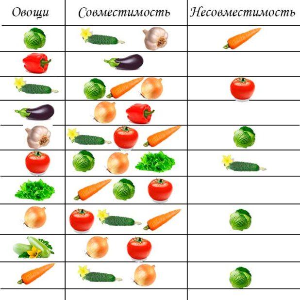 Какие овощи с чем сажать рядом