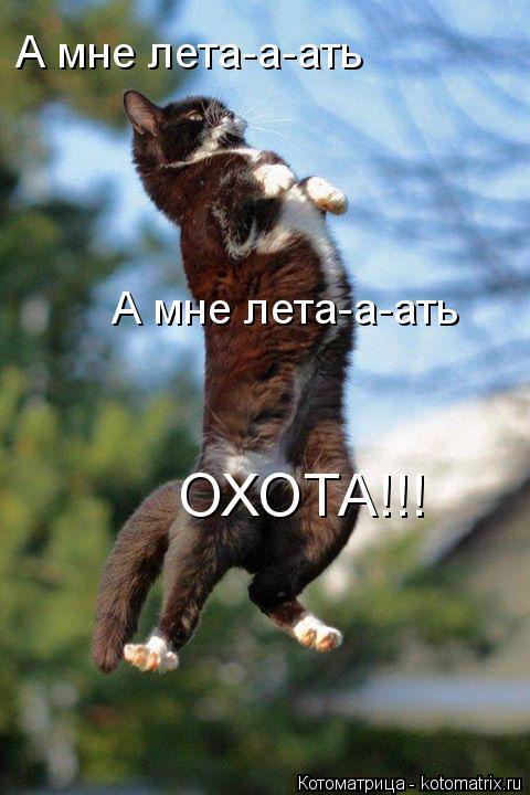 Котоматрица: А мне лета-а-ать ОХОТА!!! А мне лета-а-ать