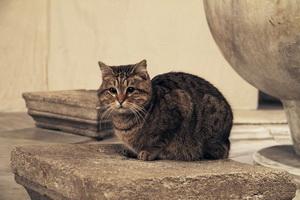 Кот в соборе
