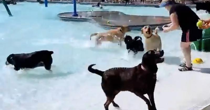 Вот как выглядит вечеринка для собак! Такого вы еще не видели!