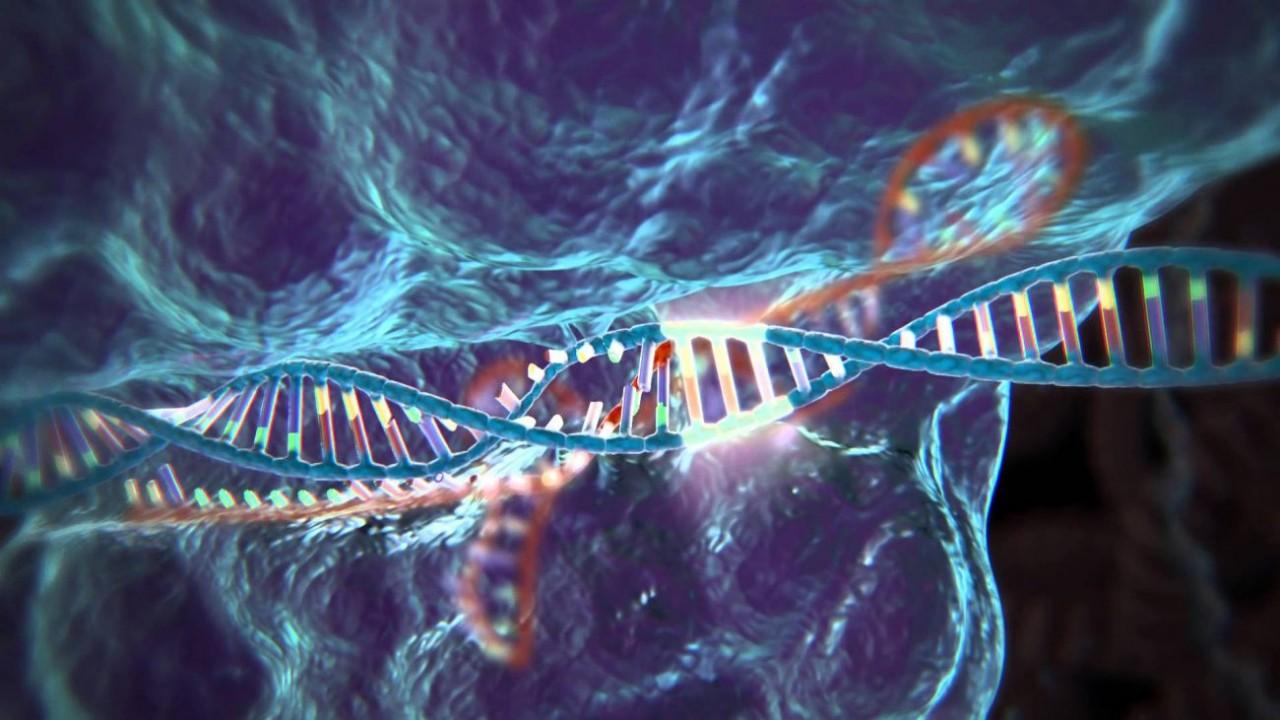 Генетически модифицированные клетки впервые были введены в организм человека