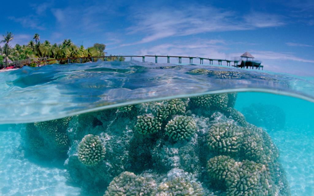 Невероятное видео! Факарава — нетронутый подводный мир