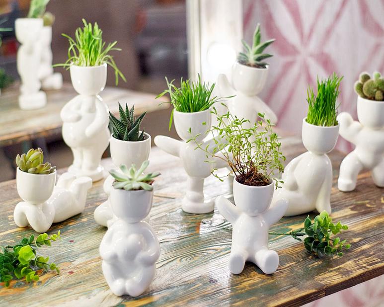 Инструкция: как развести зеленый сад в квартире, когда на улице зима