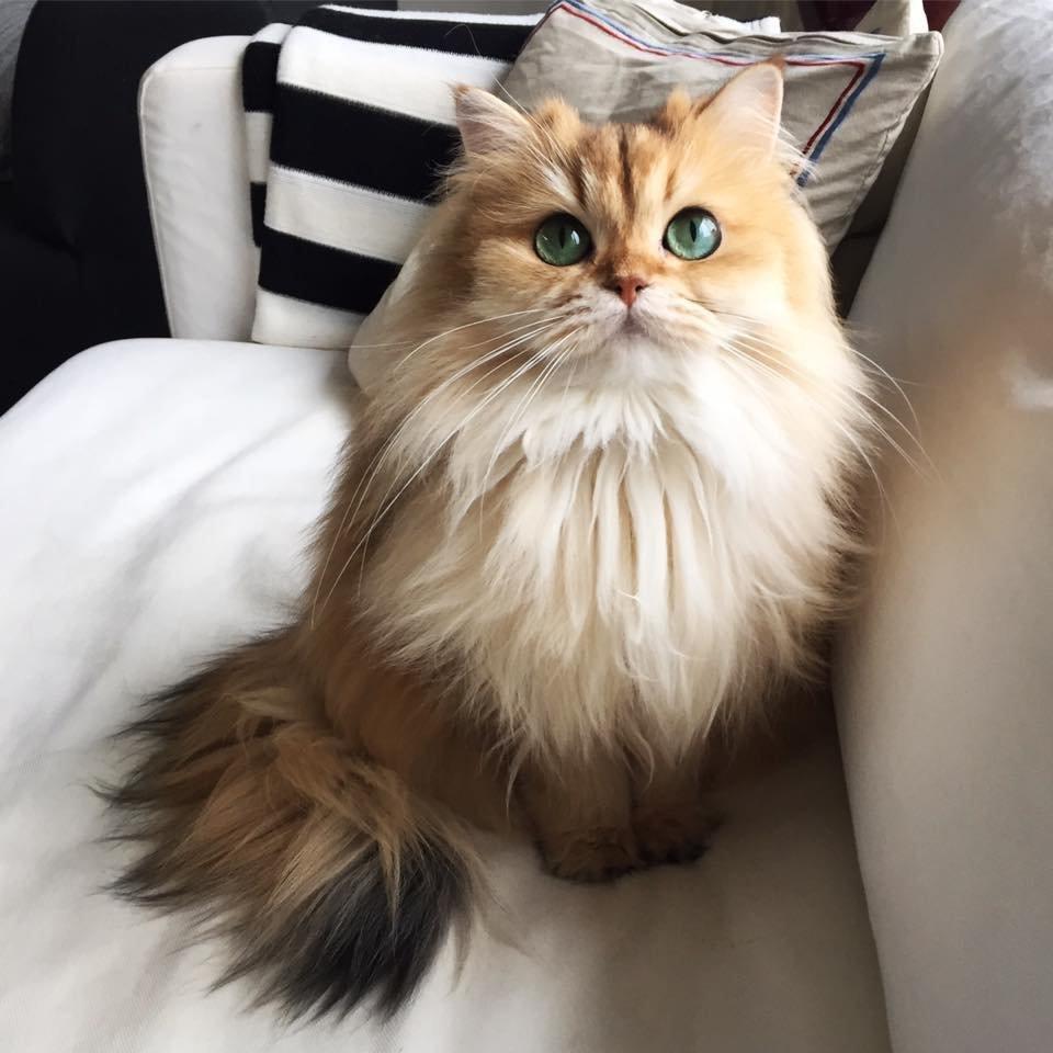 Картинки по запросу фото ленивого кота