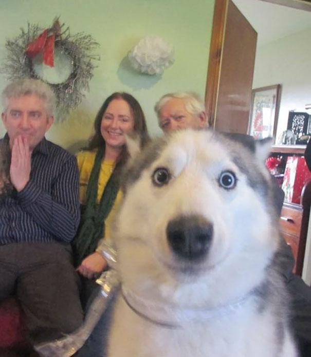 Собаки, которые ворвались в кадр, когда никто не собирался их снимать