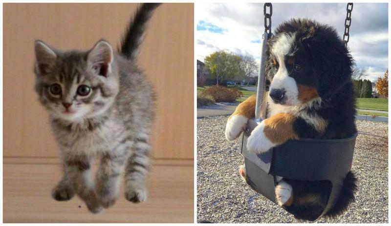 Осторожно: эти животные опасны и вызывают приступ безудержного умиления животные, мило, фото