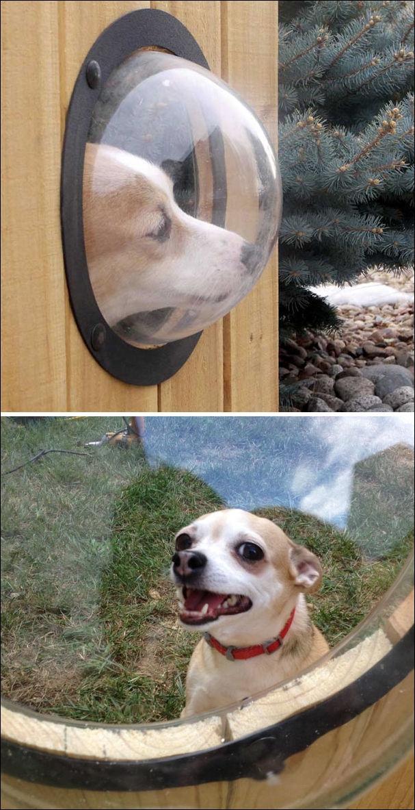 Креативные владельцы собак, которые делают для своих питомцев прикольные штуки