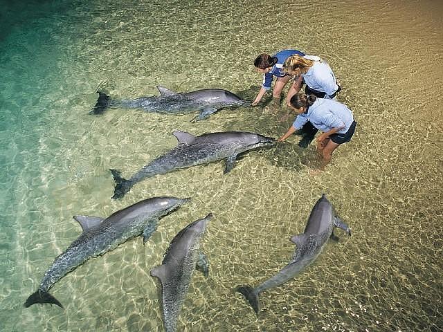 Пляж Манки-Миа, Австралия ...
