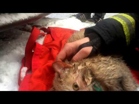 Московские пожарные спасли кота из горящего здания, надев на него кислородную маску