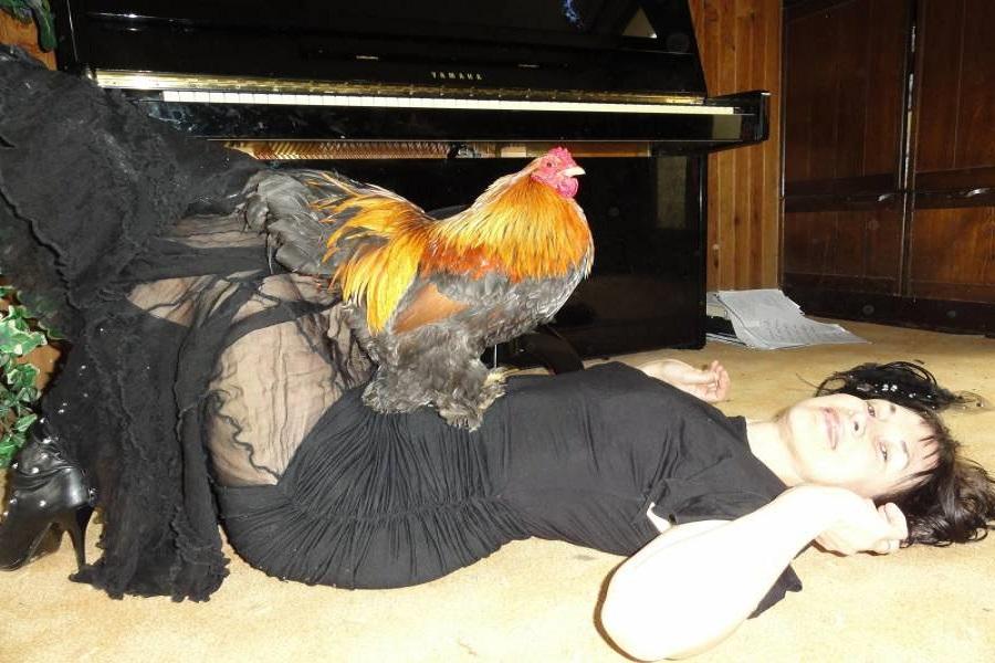 """Как петух топчет курицу и где у него """"это самое"""""""