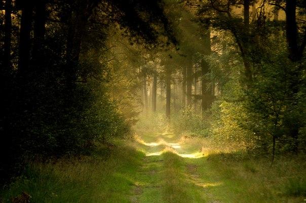 Притча о дружбе: Дорога в рай