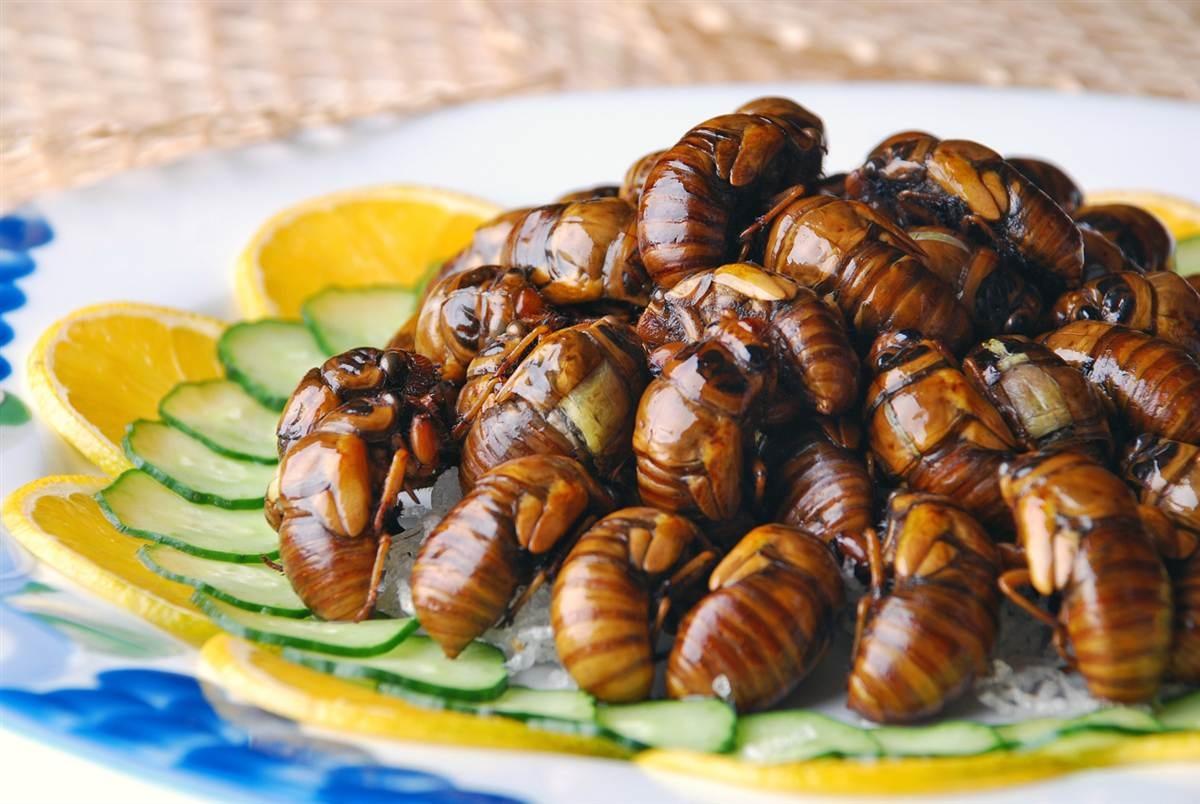 Новый Тренд Питание насекомыми  Деликатес