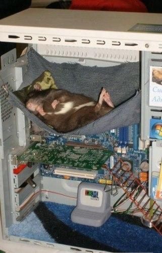 Настоящая компьютерная мышь!