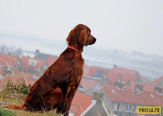ТОП-10 интересных и удивительных фактов о собаках