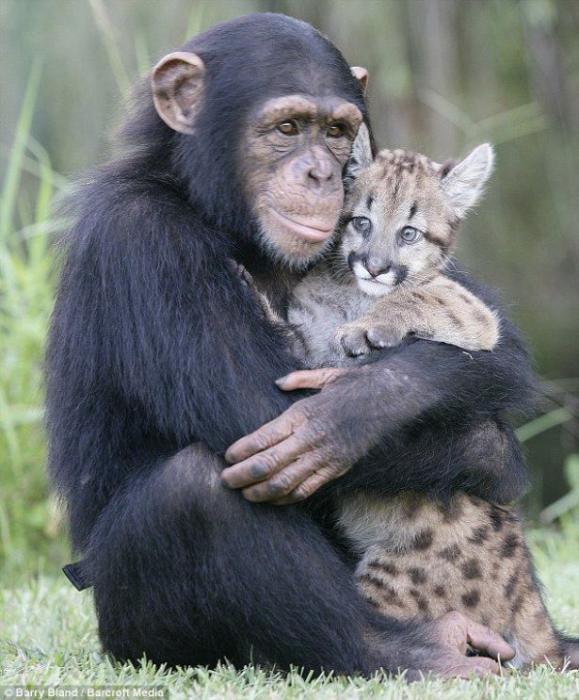 В мире забавных животных