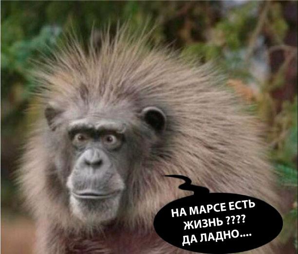 Удивленная обезьяна