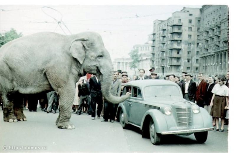Россия родина слонов