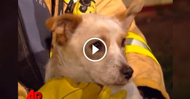 Собака не хотела покидать горящий дом