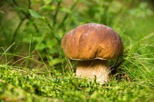 «Тихая охота». Как найти грибные места и в какое время их лучше искать?