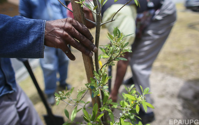 Индия установила новый мировой рекорд, посадив 49 миллионов деревьев за один раз