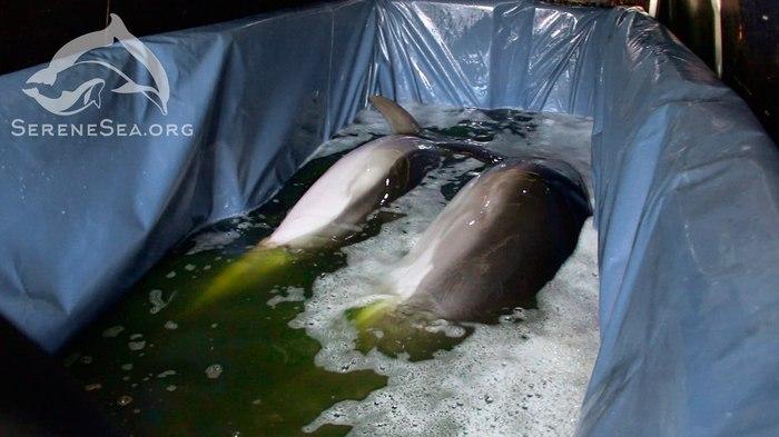 Впервые дельфины спасены из передвижного дельфинария