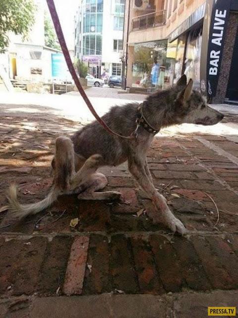 У обочины лежала полуживая собака, прикрывая собой самое дорогое...