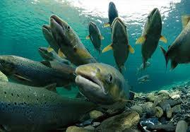 нерест ядовитые рыбы