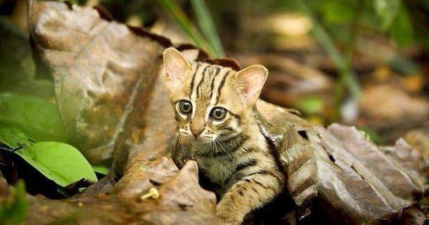 Кошка размером с ладонь