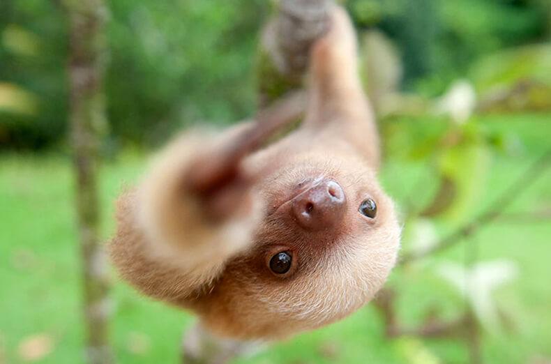 Самые очаровательные ленивые создания на Земле
