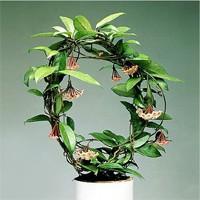 Любые ли растения можно держать дома?