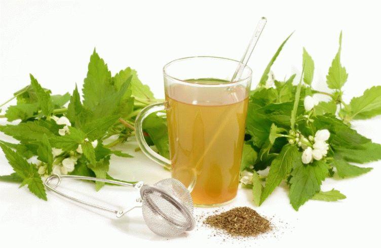 Лекарственные травы для лечения желудка и кишечника