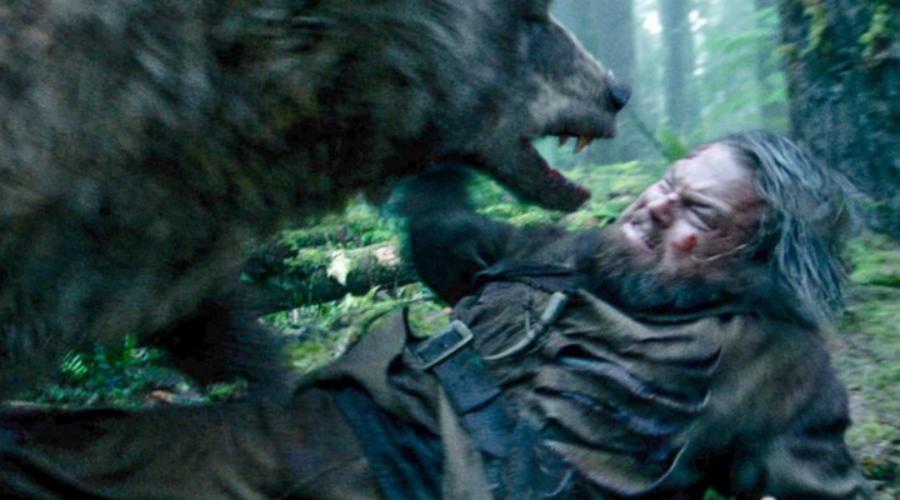 Что делать, если на вас напал медведь