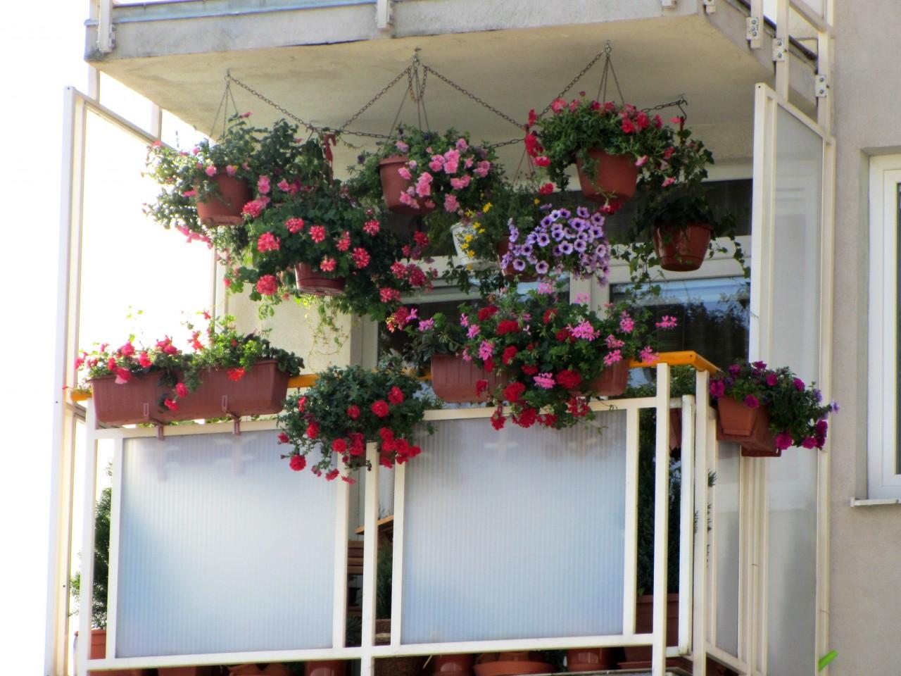 Цветы на балконе и лоджии фото