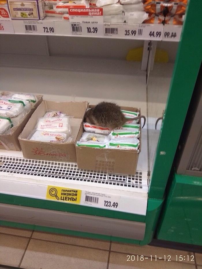 Холодно же,вот и пришла погреться: В «О'Кей» в Гатчине заметили крыску, дегустировавшую творог
