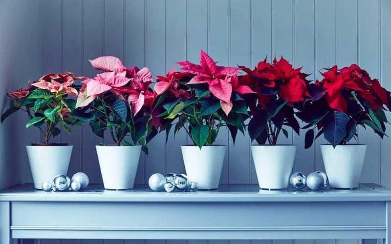 Внимание! Опасные для здоровья комнатные растения