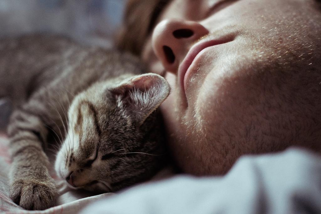 Для чего кошки ложатся спать с хозяевами?