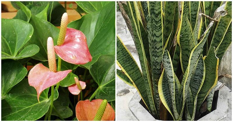 Эти растения лучше других очищают воздух в доме