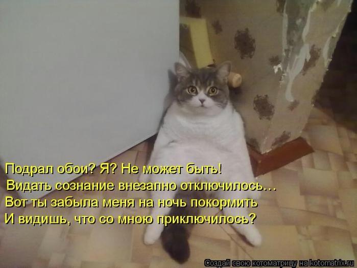 kotomatritsa_E8 (700x524, 190Kb)