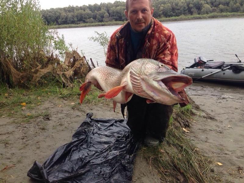 Новосибирский рыбак поймал щуку длиной с человека