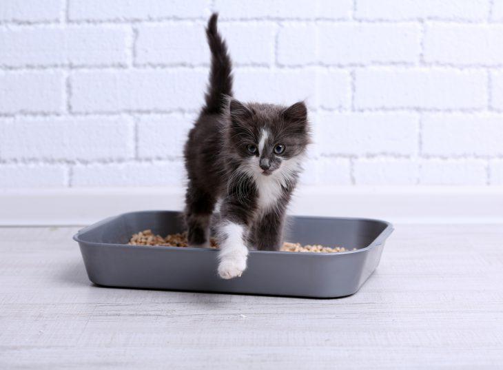 «Что там наш кот опять закапывает в туалете?!.»