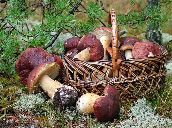 осенние грибы фото - 15