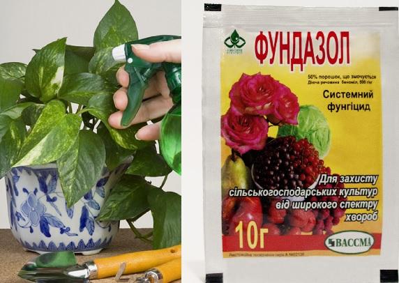 Борьба с мучнистой росой на растениях