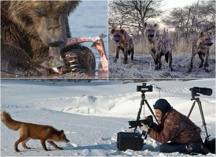 Дикая природа в объективе Сергея Горшкова
