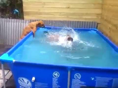 Как собаки из бассейна шину доставали