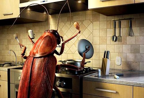 Узнайте как эффективно избавиться от тараканов без вреда для здоровья! Дешевый, но действенный способ!