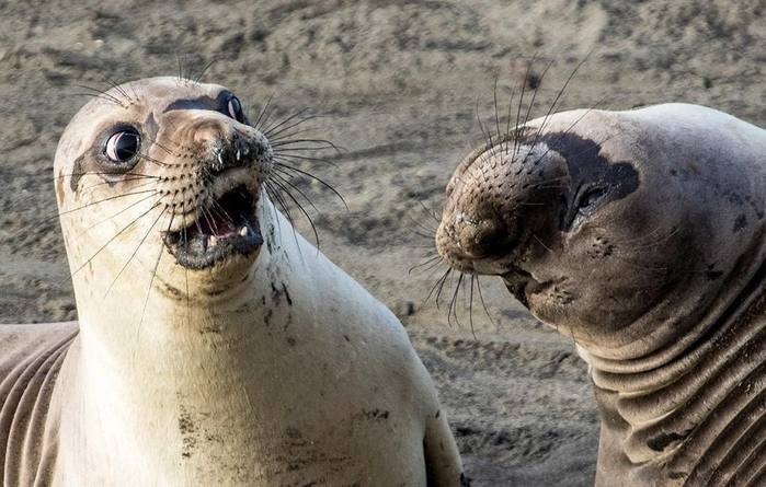 Победители конкурса на самую смешную фотографию мира животных