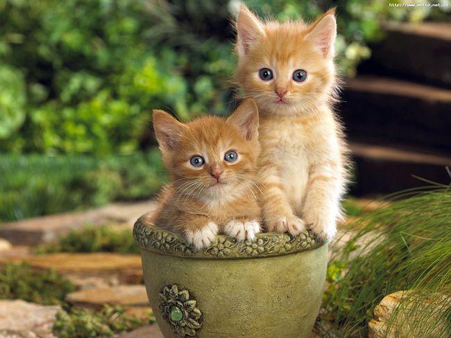 кошки, котята, факты, дом, животные