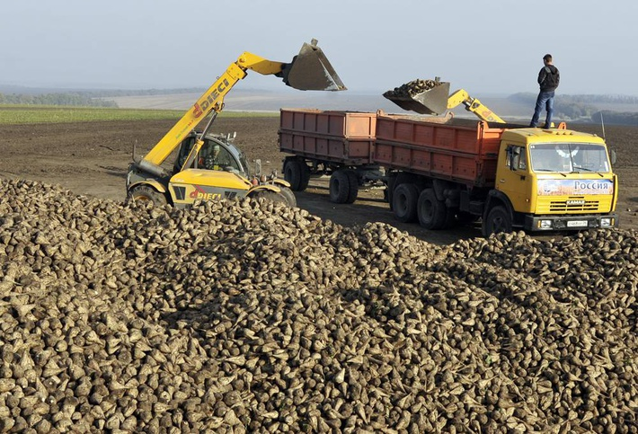 Россия стала крупнейшим в мире производителем сахарной свеклы в 2016 году